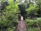 Upper Loop Trail at Fall Creek Falls